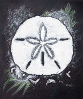 Sand Dollars Illustration